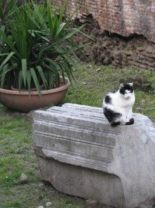 Cat at Largo Argentine, Rome
