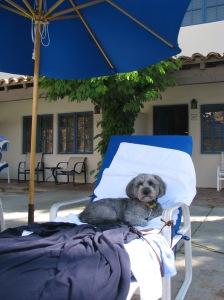 Even our dog loves La Quinta.