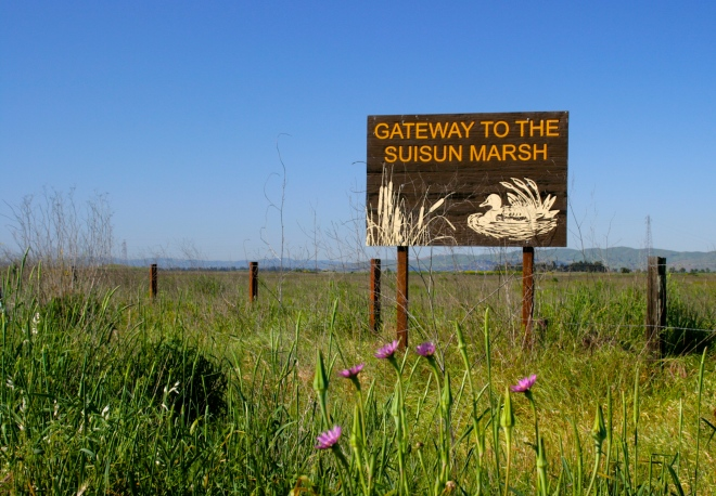 The gateway to the Suisun Marsh along Grizzly Island Rd.