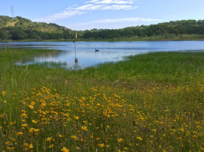 Rockville Hills lake