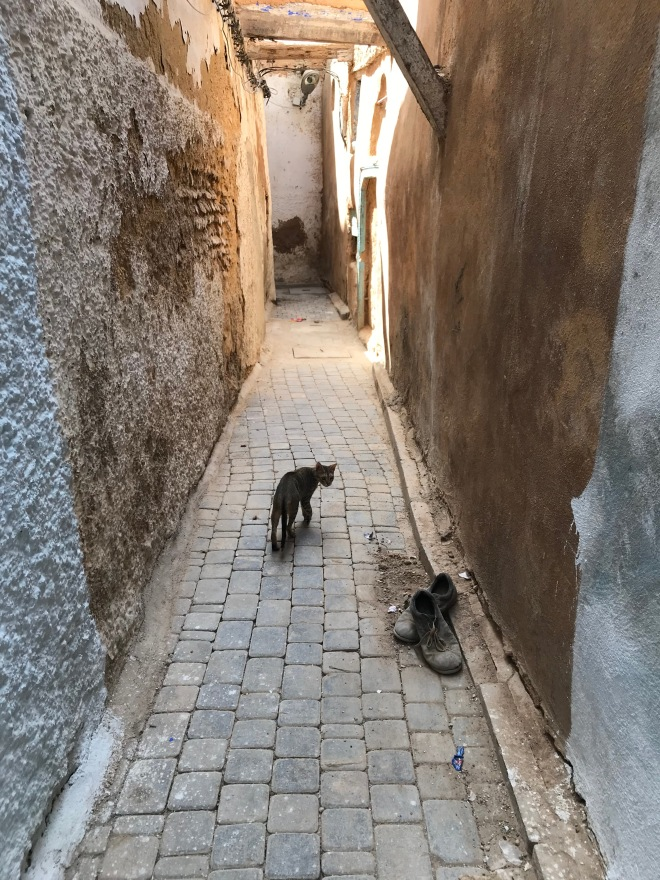 Cat in Fez alleyway