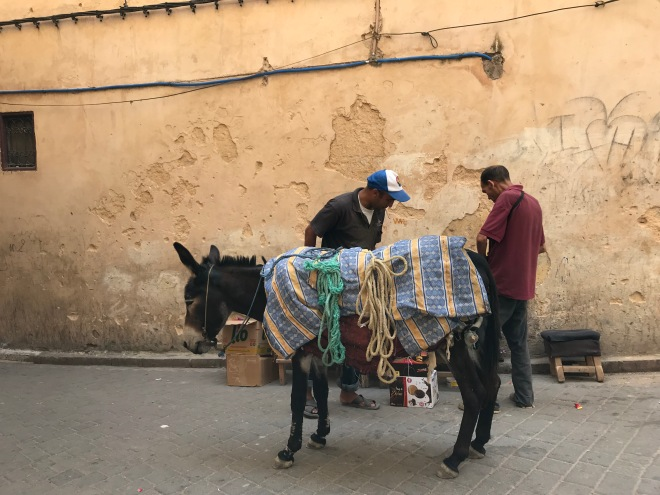 Donkeys in Fes