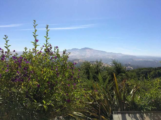 Mount Diablo with Purple Flowers